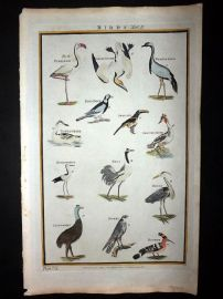 Royal Cyclopaedia C1790 Birds 32 Flamingo, Cassowary Australia Heron Hoopoe
